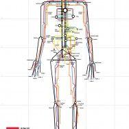 Человеческий организм как транспортная система