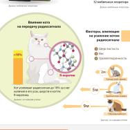 Инфографика: Как кошки влияют на связь