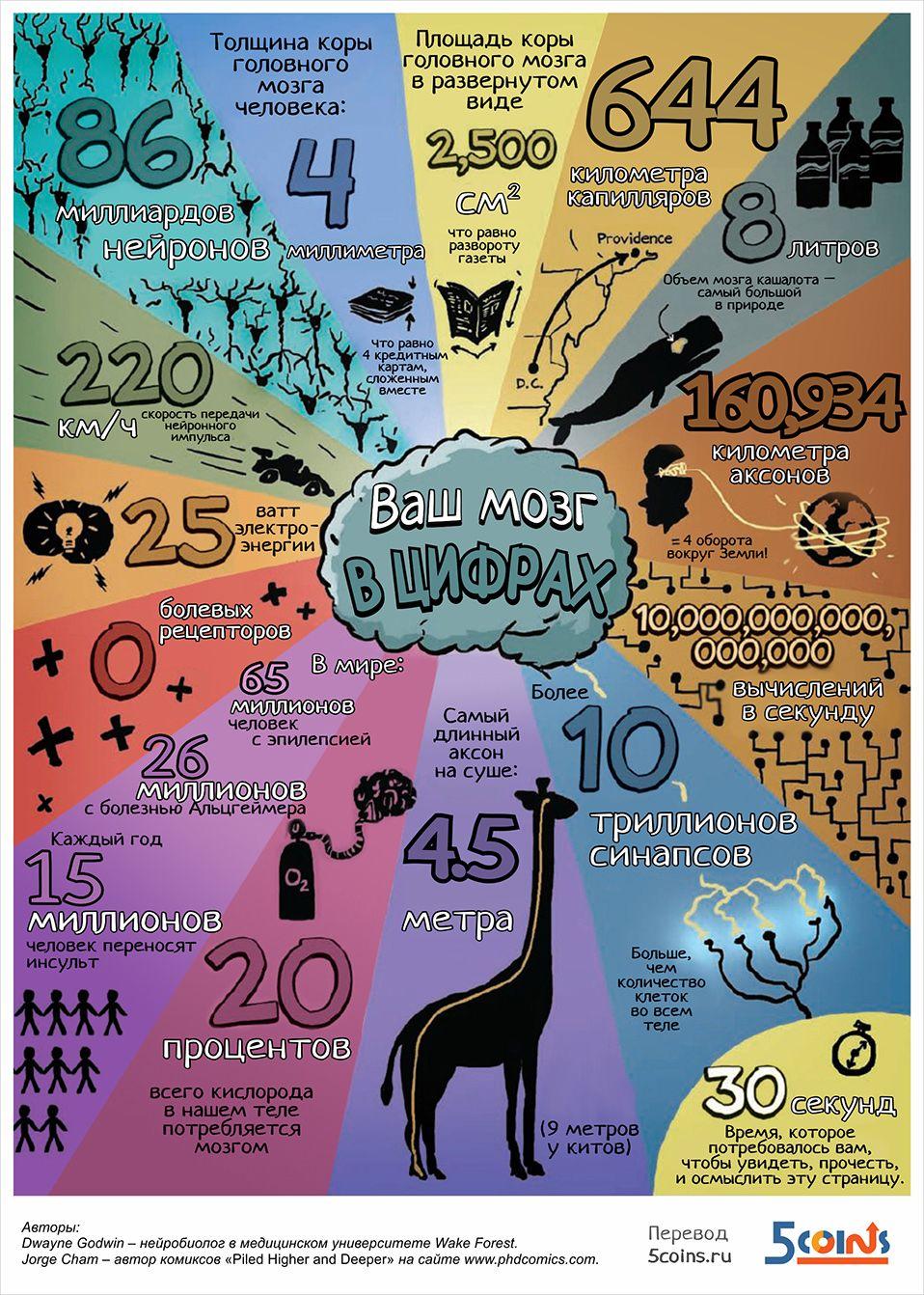 Ваш мозг в цифрах