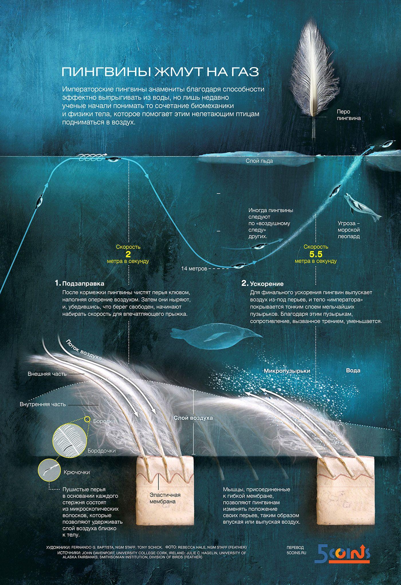 Инфографика: Пингвины жмут на газ